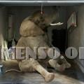 garage elefante