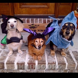 cani vestiti da halloween 117