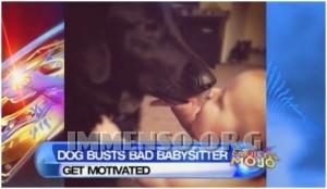cane contro babysitter