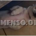 espressioni dei cani