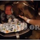 cane pitbull neonato