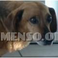 masha cane che aspetta padrone morto