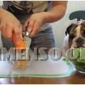 cibo per cani fatto in casa