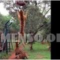 salto tigre slow motion - Maxime Dehaye