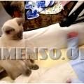 bambino video con gatto