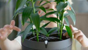 pianta-perfetta-parrot-pot