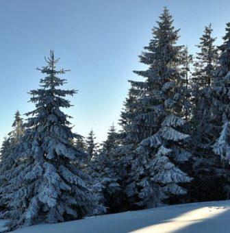 paesaggio alberi neve