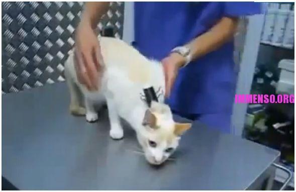 gatto immobilizzato