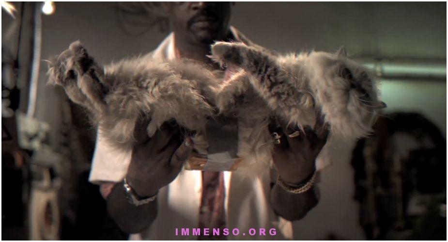 paradosso del gatto imburrato video