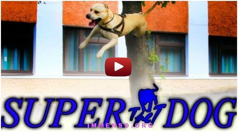 video cane che salta