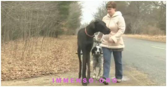 cane piu alto del mondo