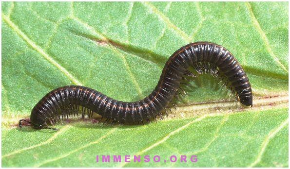 mangiare vermi insetti