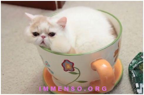 gatto in tazzina